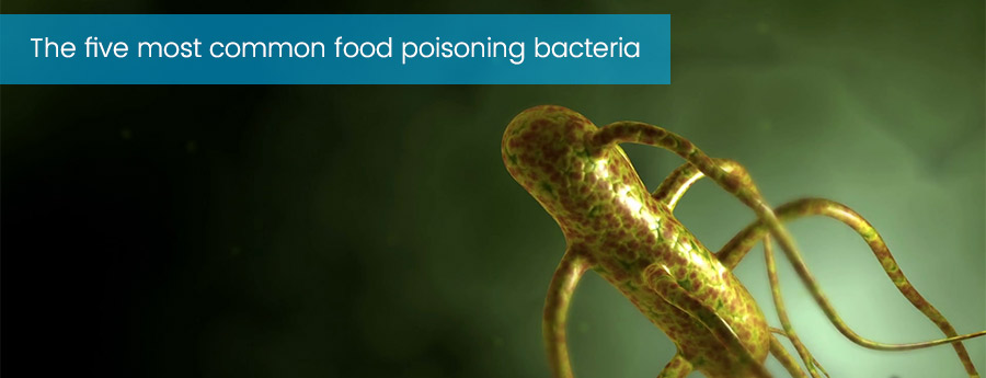 Food poisoning - Ecowize